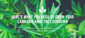 Here's What You Need to Grow Your Cannabis Amid The Lockdown