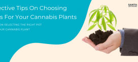 Effective Tips On Choosing Pots For Your Cannabis Plants