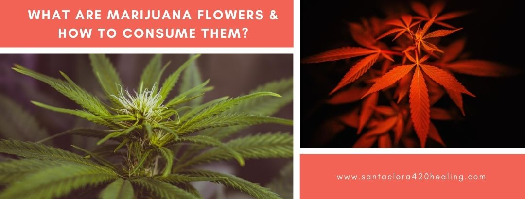 What Are Marijuana Flowers & How to Consume Them?