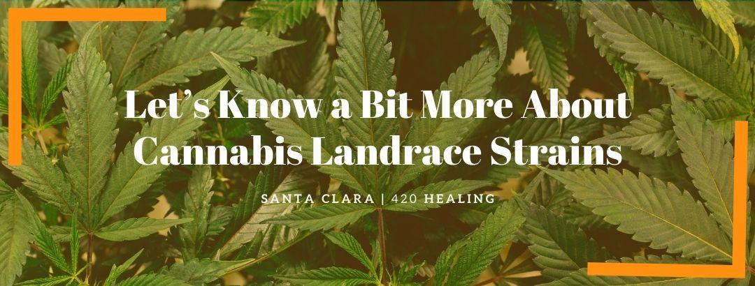 Let's Know a Bit More About Cannabis Landrace Strains