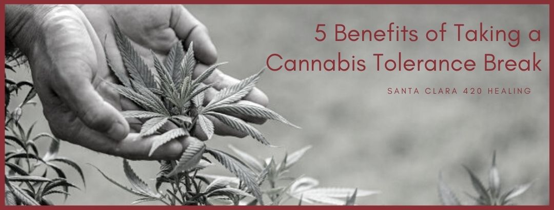 5 Benefits of Taking a Cannabis Tolerance Break