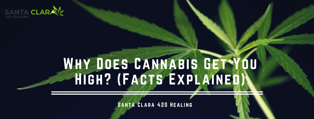 Why Does Cannabis Get You High? (Facts Explained)