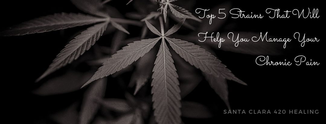 Top 5 Strains That Will Help You Manage Your Chronic Pain